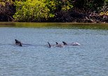 Dolphin Watching Experience in Puerto El Morro from Guayaquil