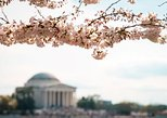 Cherry Blossom Bus Tour from Baltimore