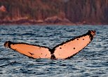 USA - Alaska: Sitka Sunset Marine Wildlife Photo Tour