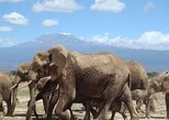 4-Days Mombasa Rendezvous Through Tsavo & Amboseli Parks- Starting From Mombasa