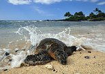 Kona Shore Excursion: Hawaiian Sea Turtles , Historic Kona & Coffee