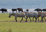1-Day Lake Nakuru National Park Tour