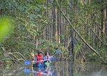 Platanares WR Mangrove Exploration by kayak
