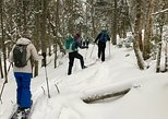 Nordic Backcountry Skiing Tour in Jacques-Cartier National Park