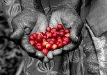 Rwandan Coffee Experience