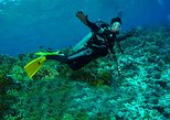 Diving Tour: Punta Pitt in The Galapagos
