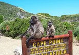 Cape Point and Stellenbosch Wine Full Day Tour