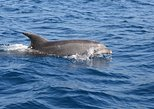 Dolphin's Watching Martinique