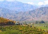 Andes Mountains Wine Adventure: Errazuriz and San Esteban Vineyards