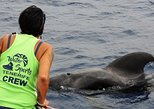 3 hour whale & dolphin cruise in collaboration with Sea Shepherd