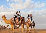 Winter Morning Camel Trek