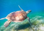 Africa & Mid East - Egypt: Red Sea Snorkeling