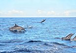 Mauritius Wild Dolphin Swim Including Transportation