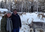 Authentic Reindeer Farm visit