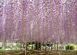 Hitachi Seaside Park & Ashikaga Flower Park
