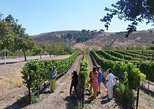 Private Wine Tour for 2 from Solvang, Los Olivos or Santa Ynez area
