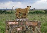 1 Full-Day Nairobi National Park, Elephant Orphange,Giraffe Centre Guided Tour