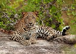 Day Excursion to Galle City with Yala National park (Leopard Safari Tour)