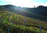 Durres, Cape of Rodon & Wine Tasting Tour
