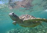 Apo Island:Swimming with Sea Turtle (Dumaguete Daytour)