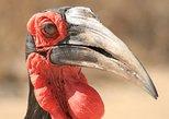 Full-Day Endangered Wildlife Tour from Hazyview