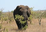 Kruger National Park and Panorama Tour Combo from Hazyview