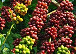 Amazing Coffee full-day tour in Buon Ma Thuot - Daklak