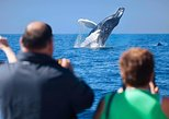 Mexico - Baja California Sur: Los Cabos Whale Watching Cruise Including Breakfast