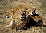 ( Cape Town ) Best Of Aquila Safari Full day Tour