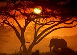 3days Gorilla Safari.Bwindi impenetrable National Park