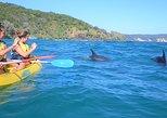 Excursión de un día de Noosa a Double Island Point en kayak con delfines. Noosa y Sunshine Coast, AUSTRALIA
