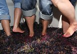 Douro Grape Harvest Small Group Tour with Grape Stomping and Wine Tasting