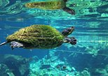 Two Cenotes Snorkeling Tour from Playa del Carmen