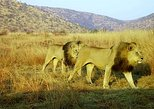 Pilanesberg,lion park & sun city tour