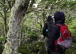 Half day Hike in the Reserva Forestal Magallanes