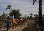 1 Hour Camel Ride in PalmGrove to enjoy Sunset