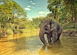 Ethical Elephant Jungle Sanctuary Tour from Phuket