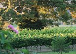 Full Day Private Luxury South Coast Winery Tour - Luxury Tesla Tour