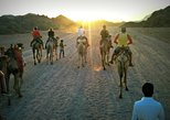 5-Hour Bedouin Camp Desert Safari Small-Group Tour from Sharm El-Sheikh