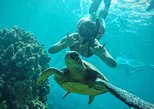 West Maui Half-Day Snorkeling Adventure from Ka'anapali Beach