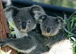 Sydney Harbour Cruise with Taronga Zoo Entry Ticket