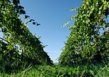 Minho and Vinho Verde Tour with Gastronomic Experiences and Wine Tastings
