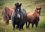 Viking Horse Riding and Golden Circle Tour from Reykjavik
