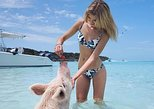 Caribbean - Bahamas: Full-Day Small-Group Tour to Pig Beach by Powerboat
