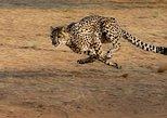 The Anne Van Dyk Cheetah Centre with Cheetah run