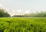 Charleston Tea Plantation and Winery Tour with Transport