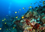 DISCOVER Scuba Diving: 2-Tank Shallow Reef Dives