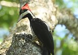 Birding and Nature Chaco Tour
