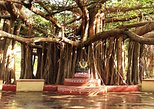 Tour to Besant Nagar Beach, Theosophical Society & Kalakshetra in Chennai