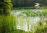 Flora Wisdom of Laos